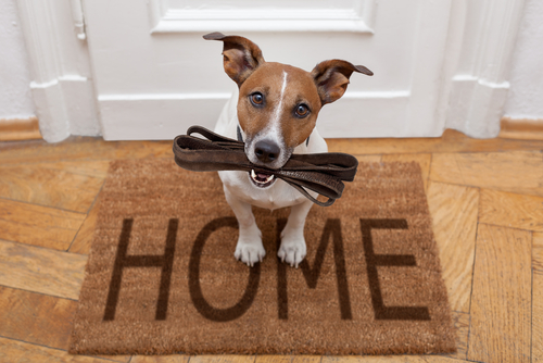 dog on welcome mat holding leash in mouth