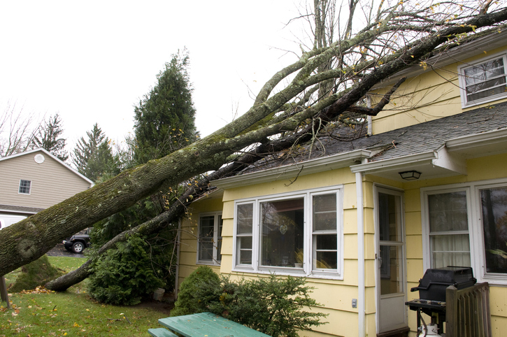 Tree fell on top of house and damaged roof